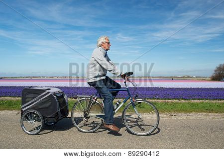 Man with doggy ride on bike in Dutch flower bulbs fields
