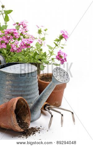 Gardening tools and flower on white background