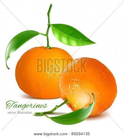Tangerines. vector illustration.