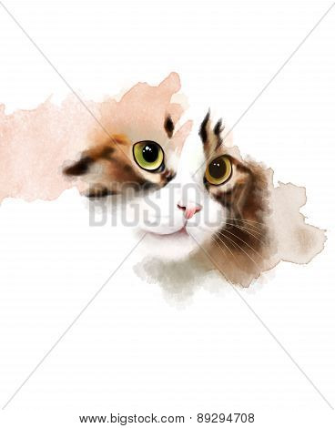 Portrait of a cat, isolated on white background.