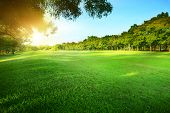 stock photo of morning  - beautiful morning sun shining light in public park with green grass field and green fresh tree plant perspective use as copy space and natural backgroundbackdrop - JPG