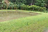 image of sprinkler  - the pond with the banana tree and sprinkler at waterside - JPG