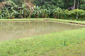 picture of sprinkler  - the pond with the banana tree and sprinkler at waterside - JPG