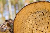 stock photo of section  - Background of sliced tree trunk - JPG