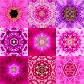foto of kaleidoscope  - Collection of Nine Purple Concentric Flower Mandalas - JPG