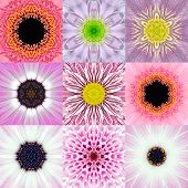 image of kaleidoscope  - Collection of Nine Pink Concentric Flower Mandalas - JPG