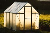 stock photo of greenhouse  - Small greenhouse in backyard in a golden light of dawn - JPG