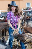 picture of feeding horse  - cowboy lady feeding horses in stable closeup - JPG