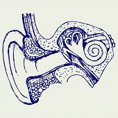 stock photo of inner ear  - Human internal ear diagram - JPG