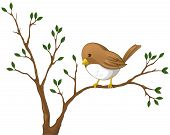 foto of nightingale  - Cute little Nightingale bird on the branch of the tree - JPG