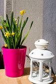 image of daffodils  - Pretty decoration outside a cafe shop yellow daffodils and white lamp still life - JPG