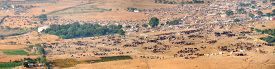 pic of camel  - Thousands of camels and other livestock are arrayed across a vast plain at the annual Pushkar Camel Fair where people travel from around the world to see and buy animals - JPG