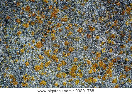 Algae and Mold On A concrete wall.