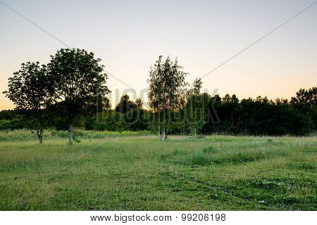 Meadow with birch trees and sunset fringe in background