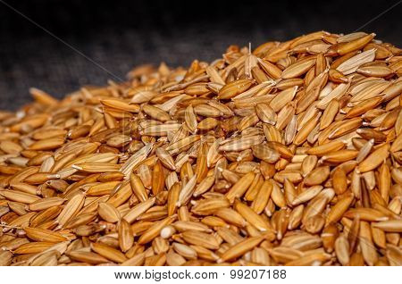 Rice grains with husks