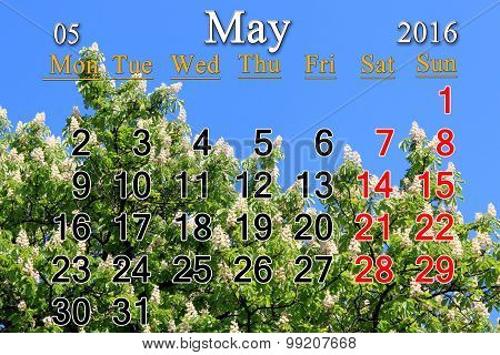 Calendar For May 2016 With Blossoming Chestnut