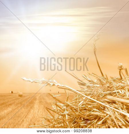 Crop field in soft gold colors in vintage style - healthy lifestyle background - photo with oil paint filter