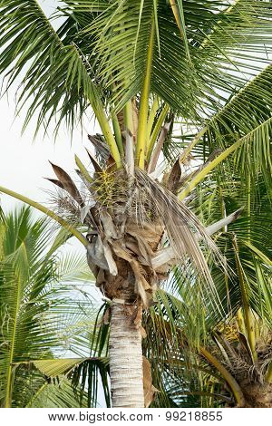 Coco-palm Tree Against Blue Sky