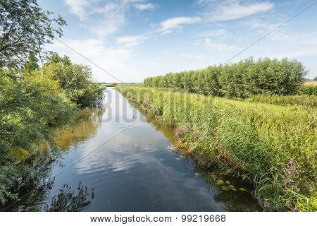 Narrow Stream In A Rural Area During Summer
