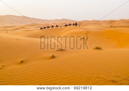 Dunes Erg Chebbi near Merzouga, Morocco -Camels caravane during a tour into the erg
