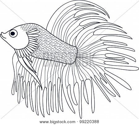 Hand Drawn Fish Cockerel
