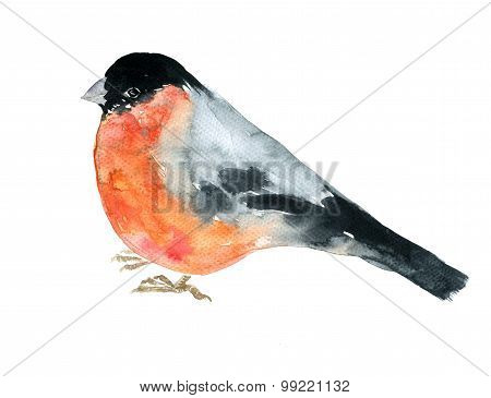 watercolor drawing bird