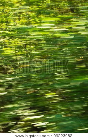 Blur of greenery while driving fast through the forest, Semenic national park