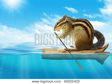 Funny Animal, Chipmunk Floating At Ocean, Travel Concept