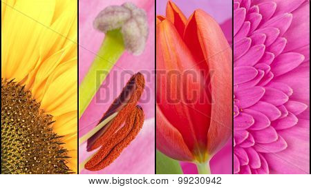 Collage Of Yellow And Pink Flowers