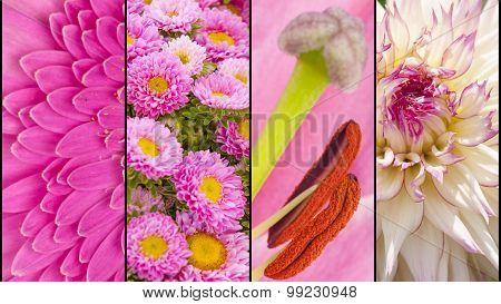 Collage Of Pink Flower Sections