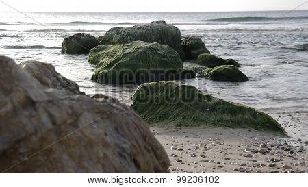 Mildew on rocks in the sea