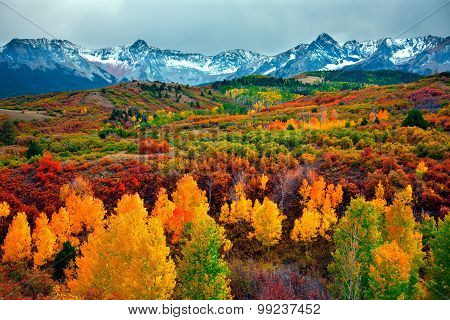 Beautiful and golden autumn