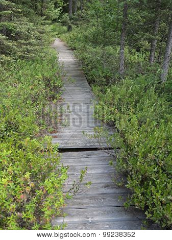 Boggy Boardwalk