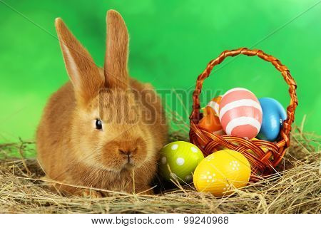Young Red Rabbit In Hay With Eggs On Green Background