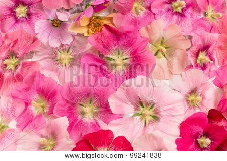 beautiful background of colorful flowers