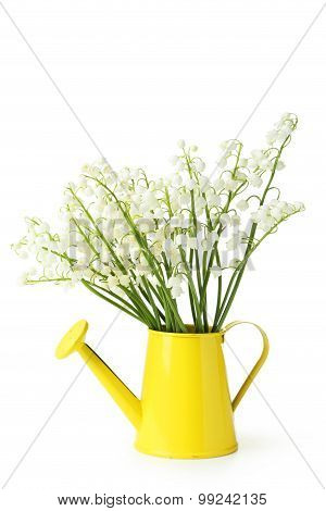 Lily Of The Valley In Watering Can On White Background