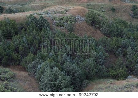 Rocky Mountain Junipers In Valley