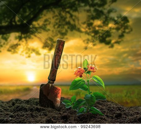 Gardening Tool And Flowers Planting On Dirt Against Beautiful  Sun Set Sky