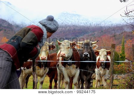 Swiss male calves and girl