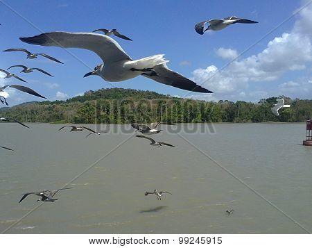 Mostrando las alas