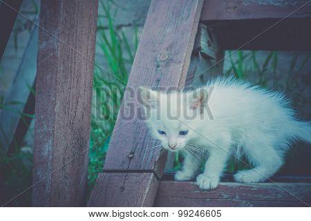 White Kitten On Wooden Stairs Retro