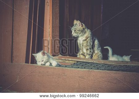 White Kittens And Mother Retro