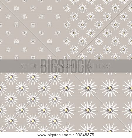 Set Of Seamless Patterns With Camomile.