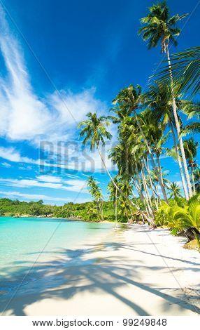 Palm Panorama Idyllic Island