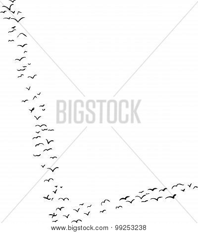 Bird Formation In L