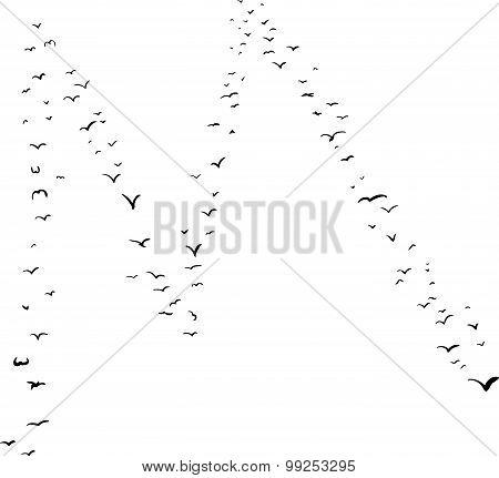 Bird Formation In M