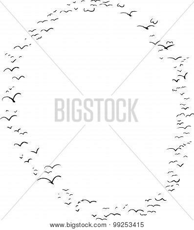 Bird Formation In O