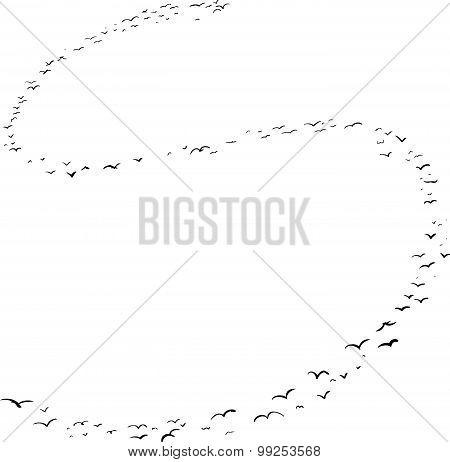 Bird Formation In S