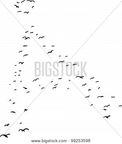 Bird Formation In Ringed A
