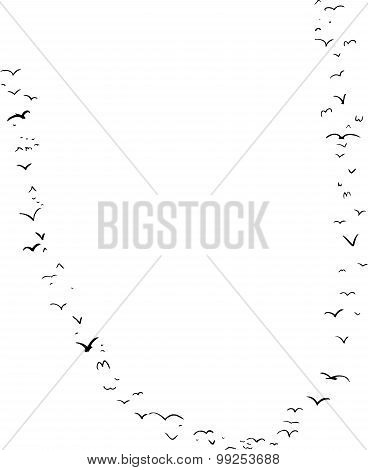 Bird Formation In U